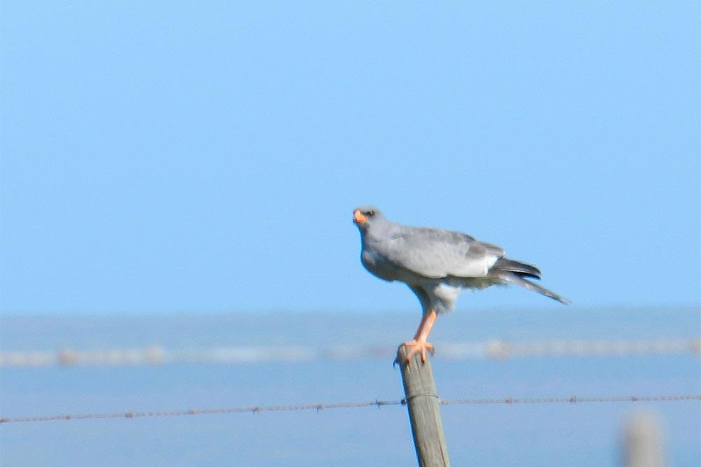 BOC farm provides home for rare birds