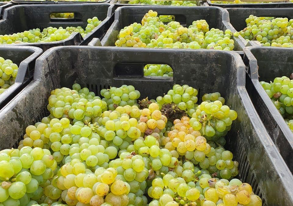 Harvest 2020: The drought, the downpour and the delight